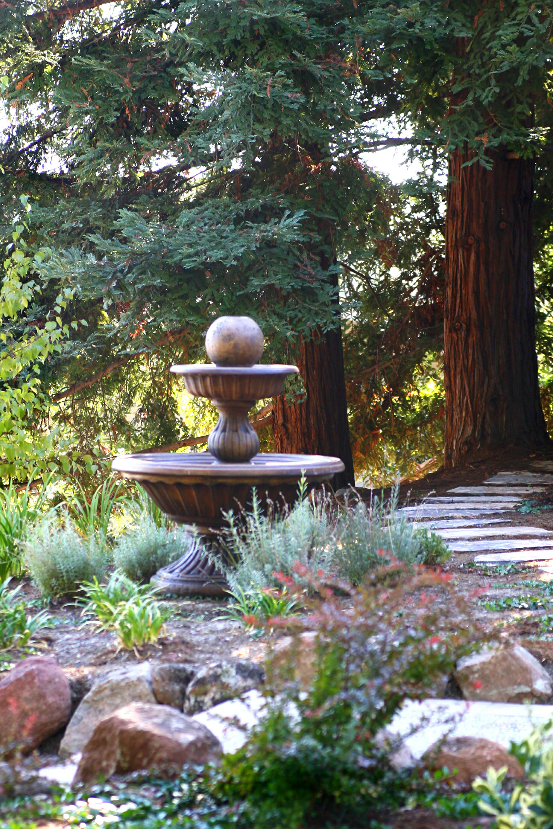 fountain with redwoods