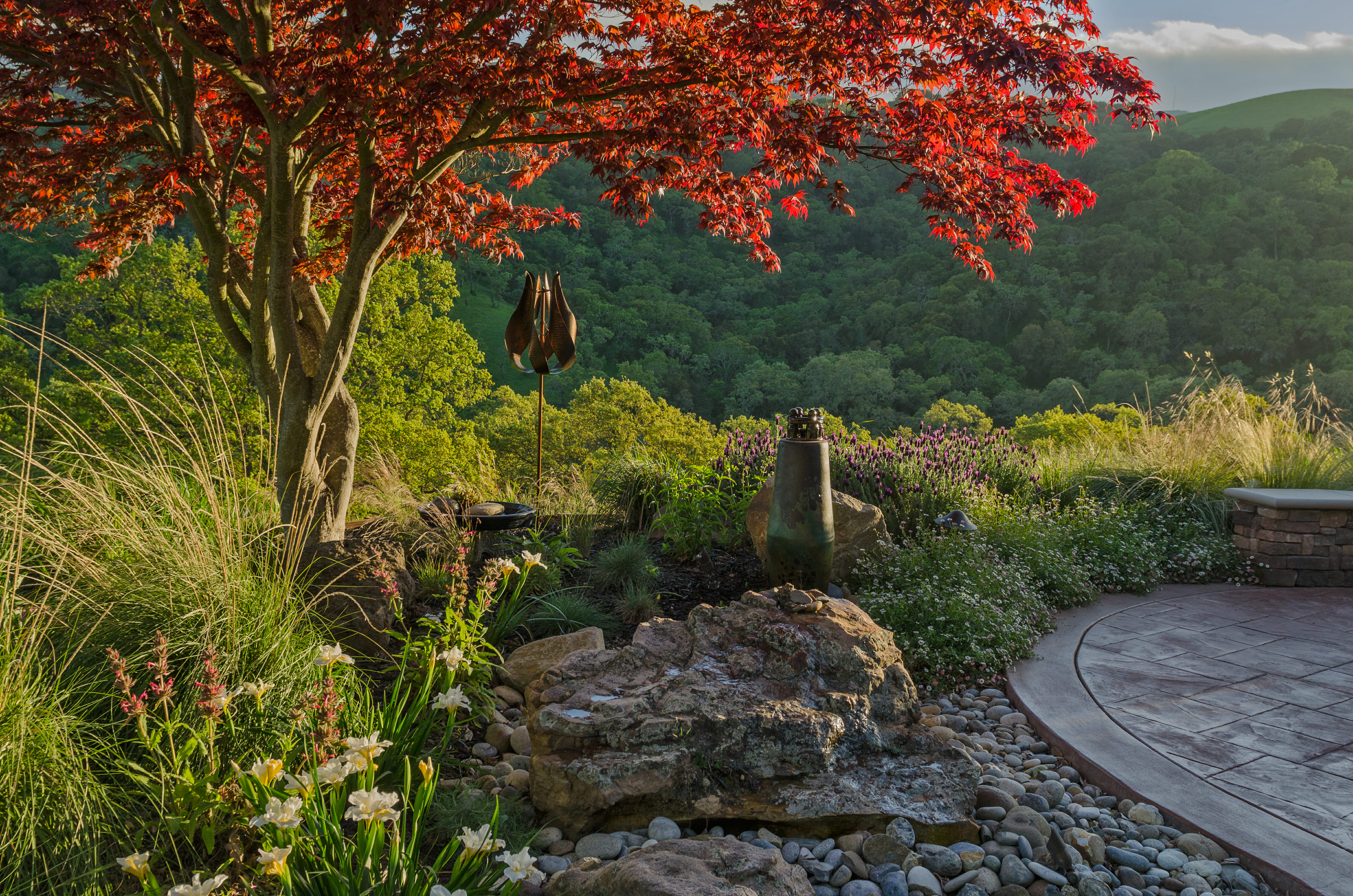 Kalich - Boulder fountain, Japanese maple tree, native planting, stamped concrete