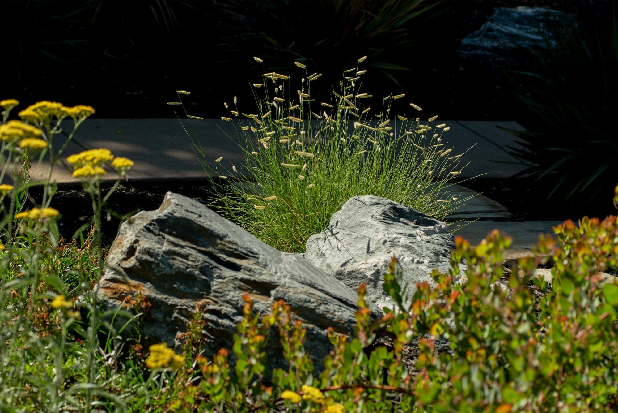 Boulders and native grasses