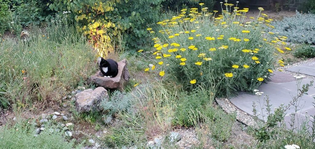 cat on boulder